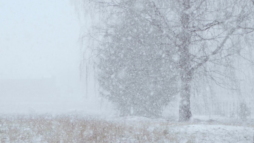 Snowstorm with heavy snowfall in late March, slow motion, blurred. | Shutterstock HD Video #1047417454