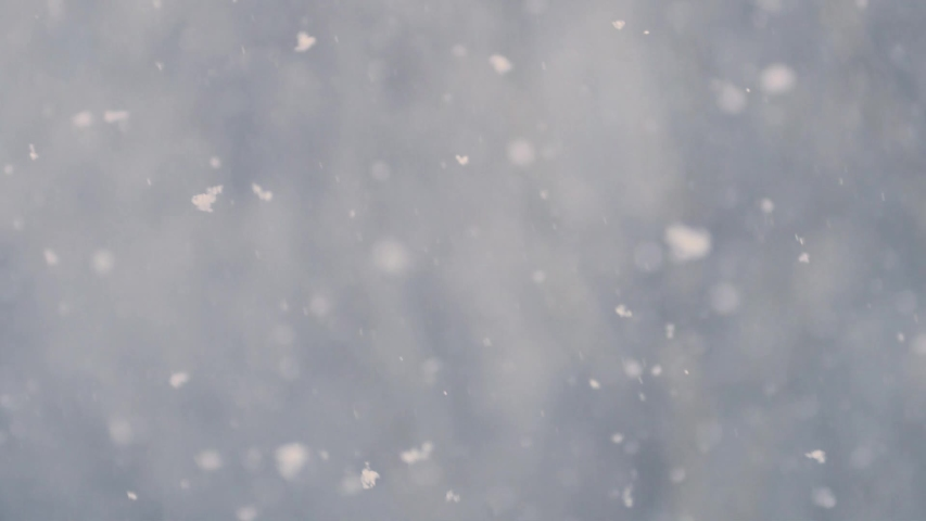 Snow falling with a bare tree in the background | Shutterstock HD Video #1047479932