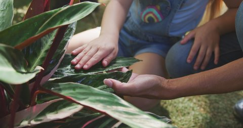Front view mid section up of a Caucasian woman and her daughter enjoying time together in a sunny garden, looking at plants together and touching their leaves, in slow motion