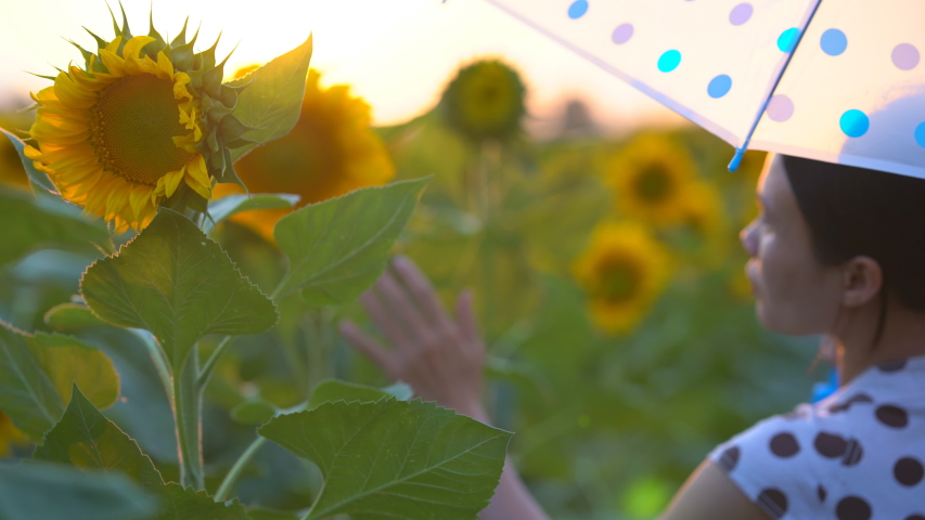 Flower garden farm agriculture, sunflower field on sunset background, women on blooming sunflower is beauty in nature outdoor landscape, sky sunset in countryside, many beautiful flower on summertime | Shutterstock HD Video #1047891736
