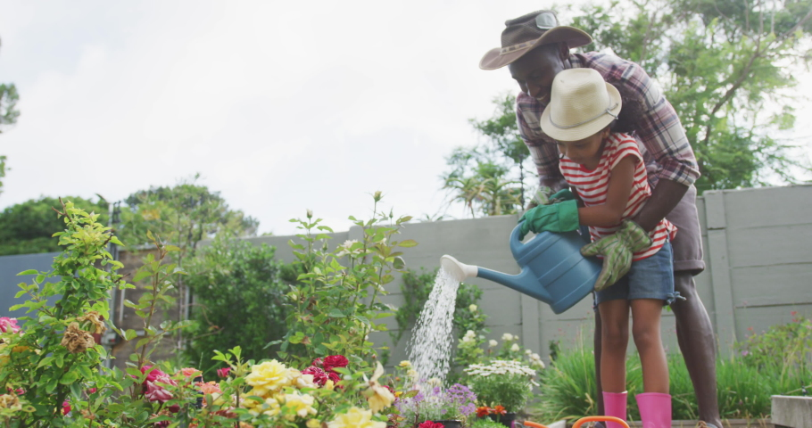 Side view of an African American man and his mixed race daughter enjoying time at a garden together, kneeling, planting, a man is holding a girl who is watering the plants with a watering can, in slow | Shutterstock HD Video #1047993529