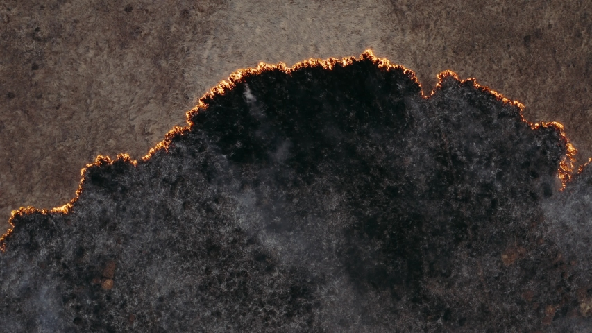 Top view and flying over the field with a line of fire. Epic video shooting, smoke clouds, the spread of fire. Deforestation, burning of dry grass. Climate change and ecology. Uncontrolled rural fire | Shutterstock HD Video #1048257790