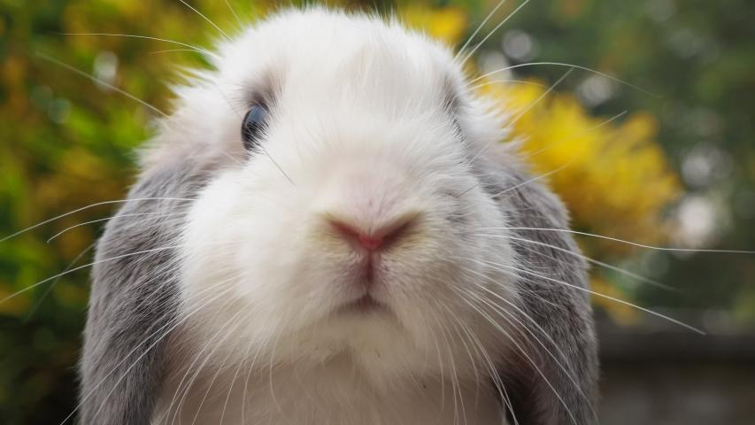 Rabbit on green and yellow tree, white rabbit little rabbit, Little white bunny