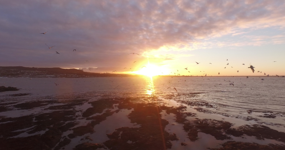 Drone shot trough group of seagulls at the coast of Ireland's eye, Ireland during sunset. | Shutterstock HD Video #1048622221