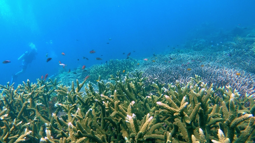 Colorful acropora corals streching over a big reef with some scuba divers in the distance | Shutterstock HD Video #1048639357