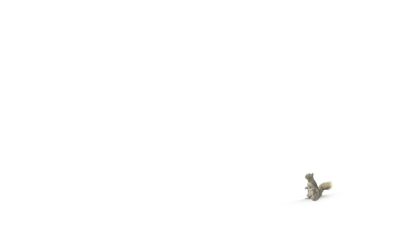 3D Render Side View Squirrel with Fur running pass the Camera isolated on White Background. , Luma Matte Included.