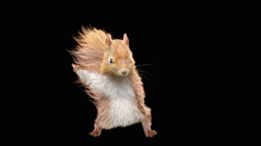 Squirrel Dance CG fur 3d rendering animal realistic CGI VFX Animation Loop  composition 3d mapping cartoon, with Luma matte