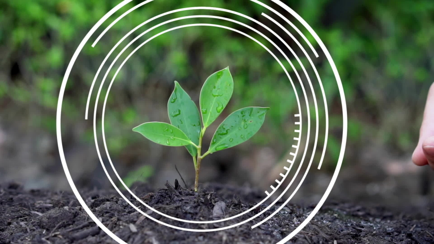 Smart digital agriculture technology by futuristic sensor data collection management by artificial intelligence to control quality of crop growth and harvest. Computer aided plantation grow concept. Royalty-Free Stock Footage #1049130871