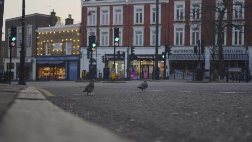 Crouch End, London / UK - March 24 2020: Coronavirus Lockdown. Pigeons on Empty Street, Crouch End Broadway, Bus Passes.