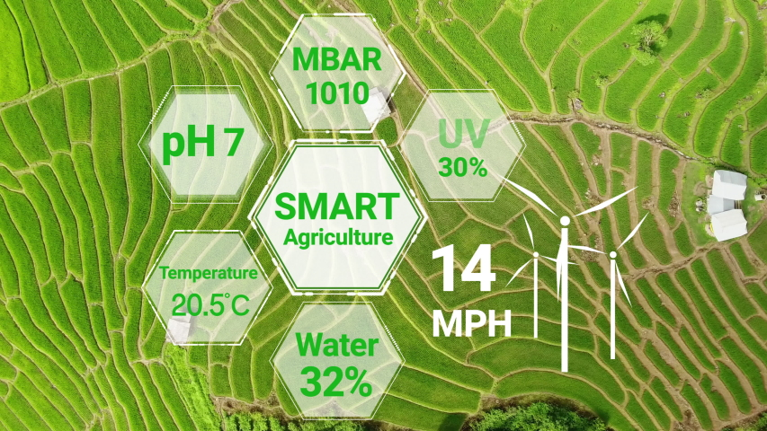 Smart digital agriculture technology by futuristic sensor data collection management by artificial intelligence to control quality of crop growth and harvest. Computer aided plantation grow concept. Royalty-Free Stock Footage #1049460292