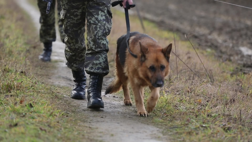Dog and a soldier are patrolling the border, closeup. Soldier walks with German Shepherd. Dog with border guards at the state border patrols the territory. Dog in the army is walking near a soldier.