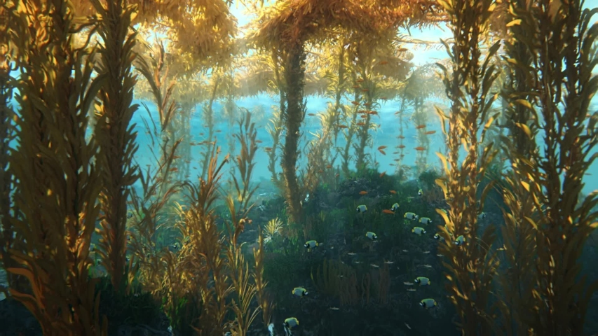 A school of fish swarming among seaweed, the underwater world under the sun