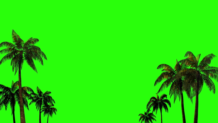Palm trees in the wind for chromakey with alpha channel on a green background. 3D rendering