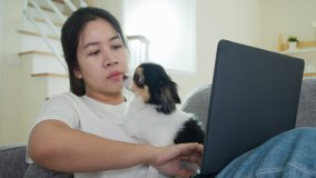 Asian woman employee working remotely, taking phone and video conference on sofa at home. Asia female video call meeting and pets interruption while working at home. Working from home problem concept