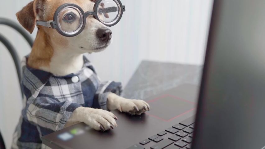 Smart dog programmer coder accountant blogger using computer. Funny pet in nerd glasses typing on laptop keyboard. Freelancer lifestyle working from home. quarantine Social distancing. video footage Royalty-Free Stock Footage #1050392533