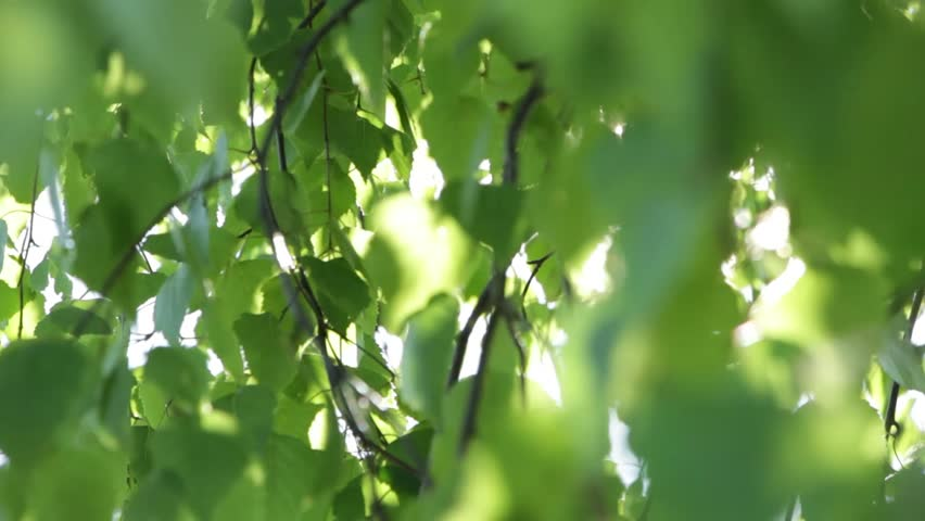The sun streaming through the leaves of the tree | Shutterstock HD Video #10504571