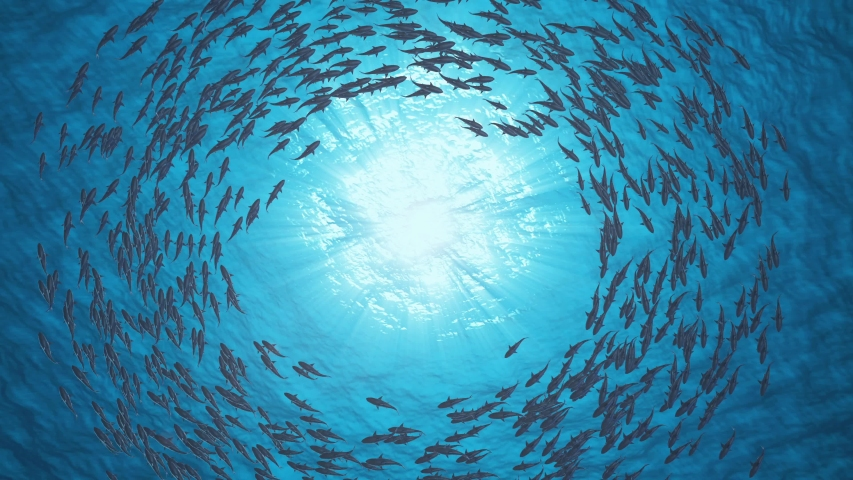 Group of Shark Moving in Circle, Underwater View of Shark, Water Creatures, Sea Background. | Shutterstock HD Video #1050820555