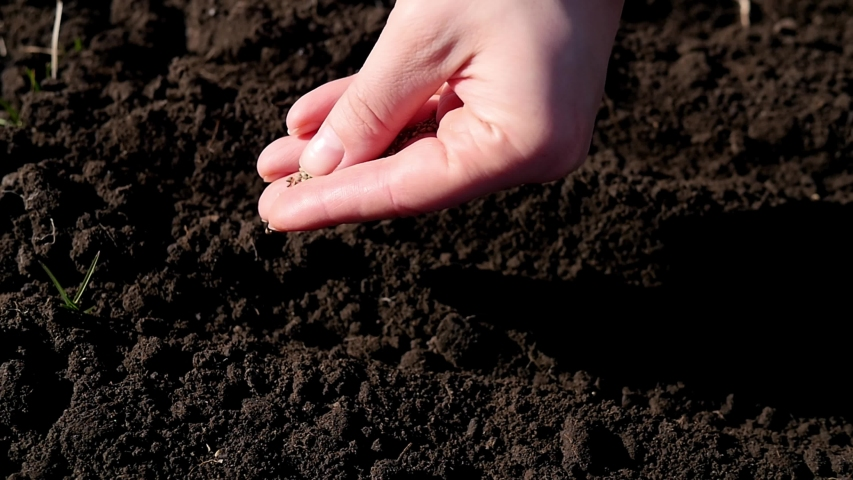 Farmer hands planting for planting seeds in the garden. Close-up of a girl's hands putting seeds in the ground. The concept of organic farming and spring gardening Royalty-Free Stock Footage #1050825334