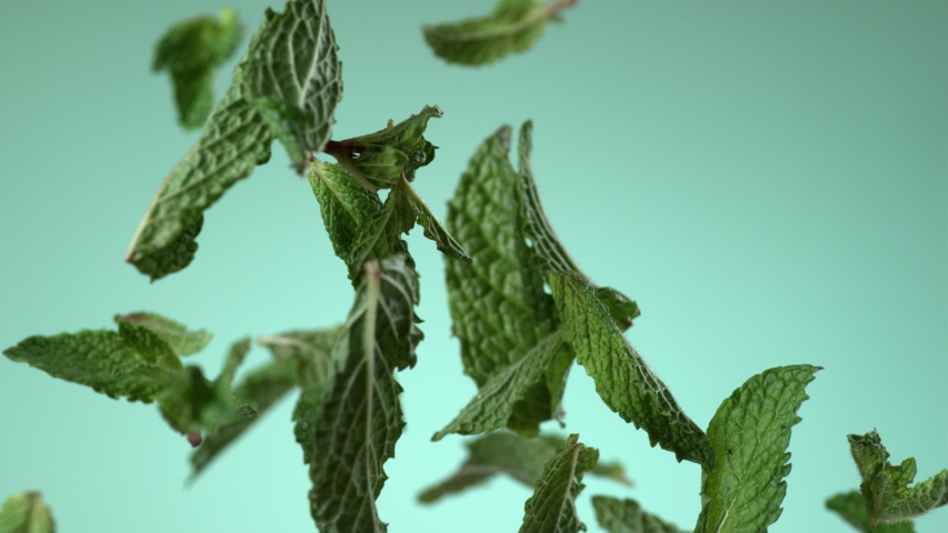 Mint leaves flying on green background in slow motion. . Royalty-Free Stock Footage #1051359826