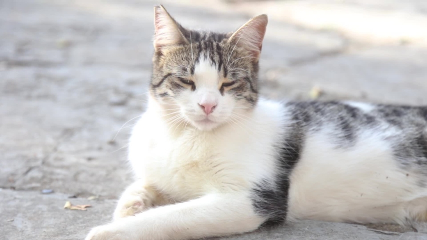 White cat sitting on floor | Shutterstock HD Video #1051412260