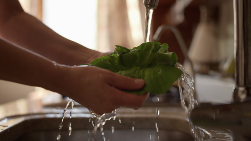 Cooking salad in the kitchen. Closeup of female hands wash lettuce leaves in the kitchen sink. Macro frame of a girl washing vegetables.  Royalty-Free Stock Footage #1051459150