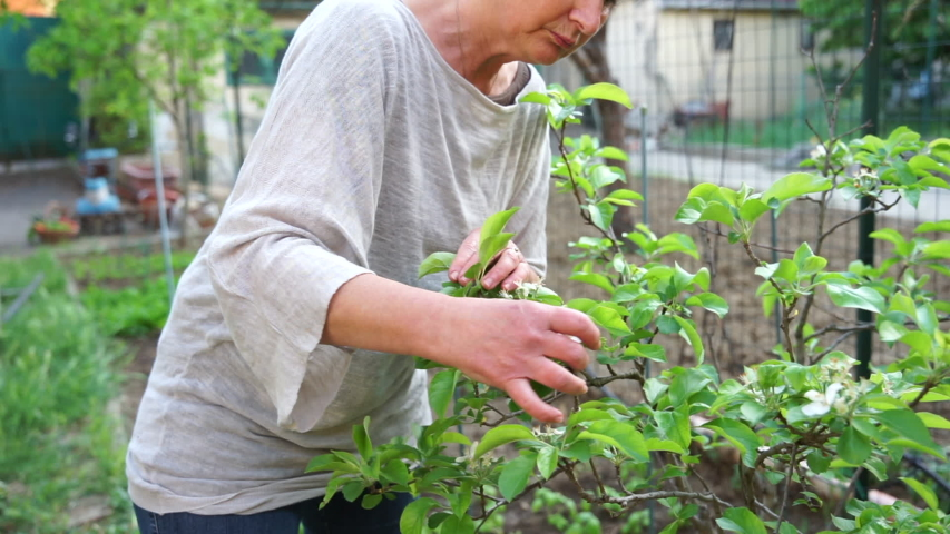 Friendly adult woman controls the flowering of a plant in her urban garden waiting for the birth of the fruits for harvest - Ecological and sustainable | Shutterstock HD Video #1051745647