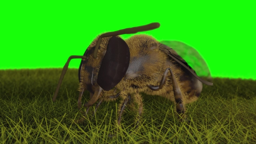 Bee Asian hornet 3d animation