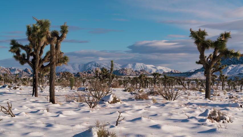 Time lapse telephoto shot of snow covered Joshua Tree in Mojave Desert, California