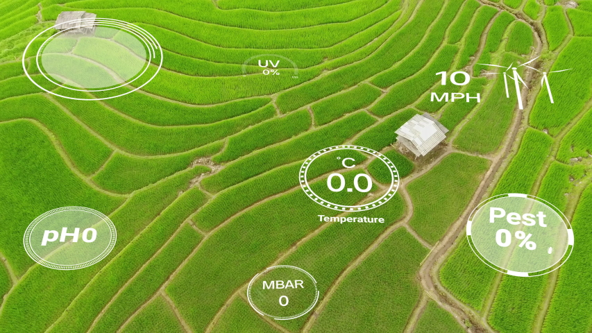 Smart digital agriculture technology by futuristic sensor data collection management by artificial intelligence to control quality of crop growth and harvest. Computer aided plantation grow concept. Royalty-Free Stock Footage #1052255497