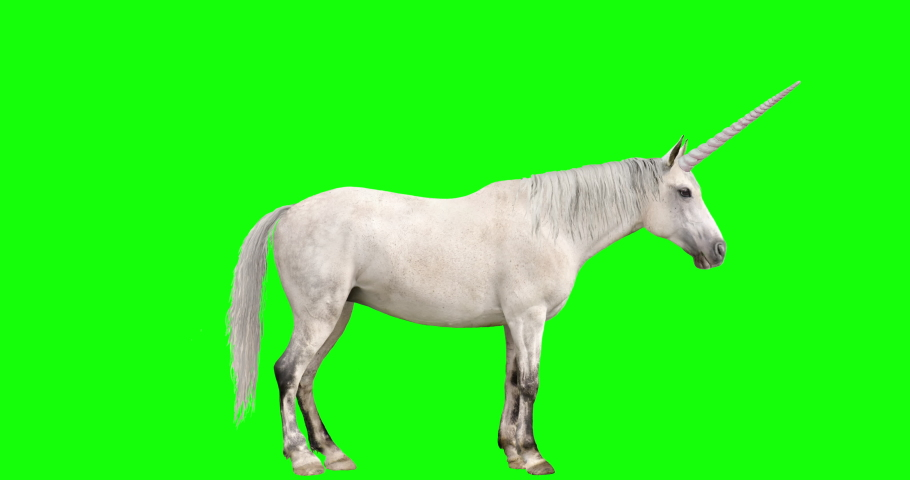 Animation featuring white unicorn with loopable gaits. The unicorn goes from standing position, to walk, to trot, to canter, to run (gallop), and back down to standing. Simply edit out any gait and lo