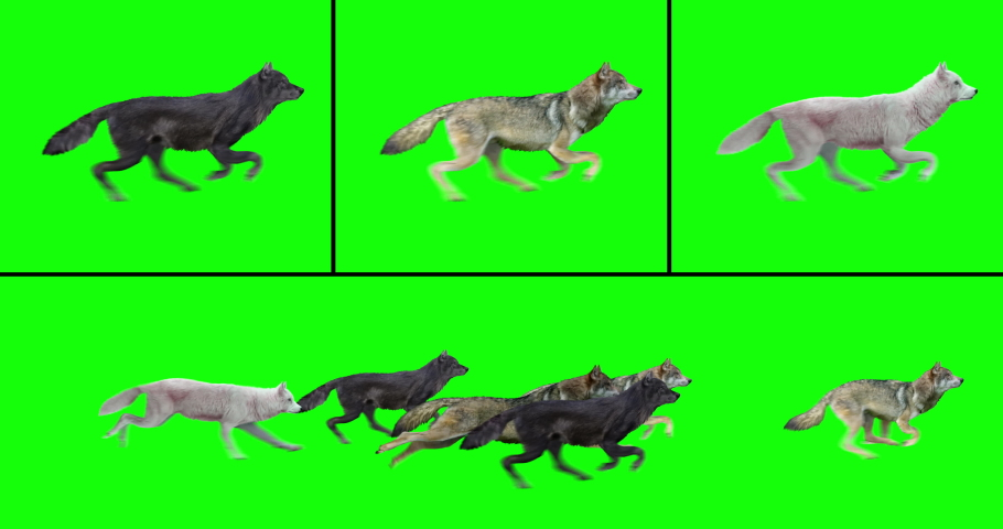 Animated pack of six wolves running, and three individual running wolves, isolated on green background. Create your own wolf pack with the individual brown, white, and black wolves.