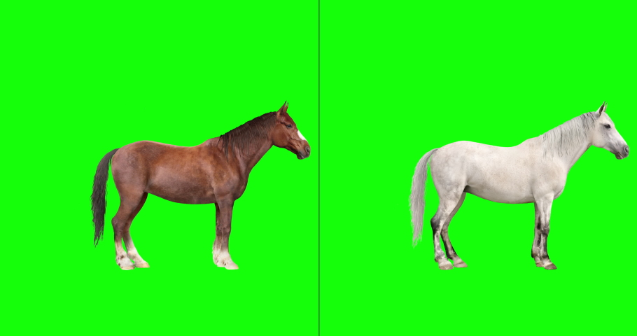 Animated brown and white horses performing a variety of actions: kick, buck (loopable), gallop (loopable), jump, canter (loopable), rear up, and graze. Isolated on a green background.