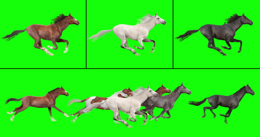 Animated herd of six horses running, and three individual galloping horses, isolated on green background. Create your own herd with the individual brown, white, and black horses.