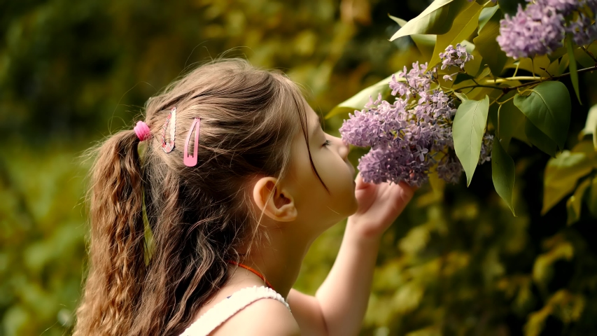 Cute Baby Girl Adorable Little Smelling Flower.Happy Beautiful Kid With Pretty Face Having Fun.Cheerful Preschool Funny Child Daughter Enjoy Spring In Botanical Garden Smell Lilac.Cute Baby Girl Fun   Shutterstock HD Video #1052428834