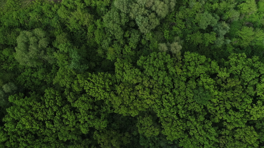 4K aerial drone shoot. Flying over a beautiful green forest in a rural landscape. Top view of trees in forest background. Drone photography. Forest river, rural road. | Shutterstock HD Video #1052609063