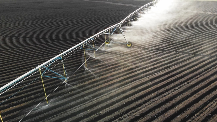 Vegetable field and irrigation equipment. potato field irrigated by a pivot sprinkler system. crop Irrigation using the center pivot sprinkler system