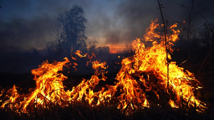 Wild fire in spring close up view. Deforestation and global warming concept. Rain forest wildfire disaster, dry bushes burning, fire reasons, ecology, earth, climate change, air pollution Royalty-Free Stock Footage #1052658287
