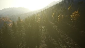 Aerial Drone View Flight over pine tree forest in Mountain at sunset