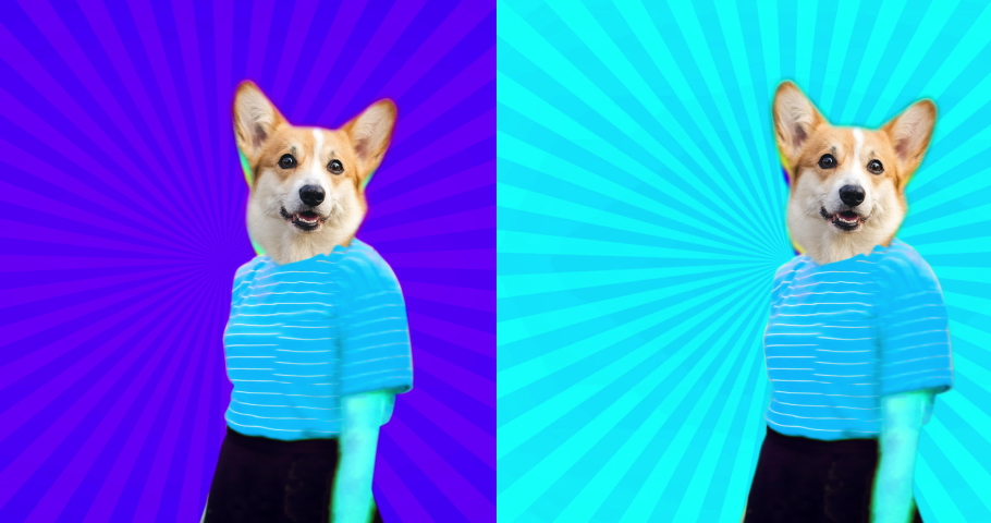 4K Minimal animation motion design. Pretty funny corgi face on dancing girl. Strip lover vibes. Pop and dance mood | Shutterstock HD Video #1052730569
