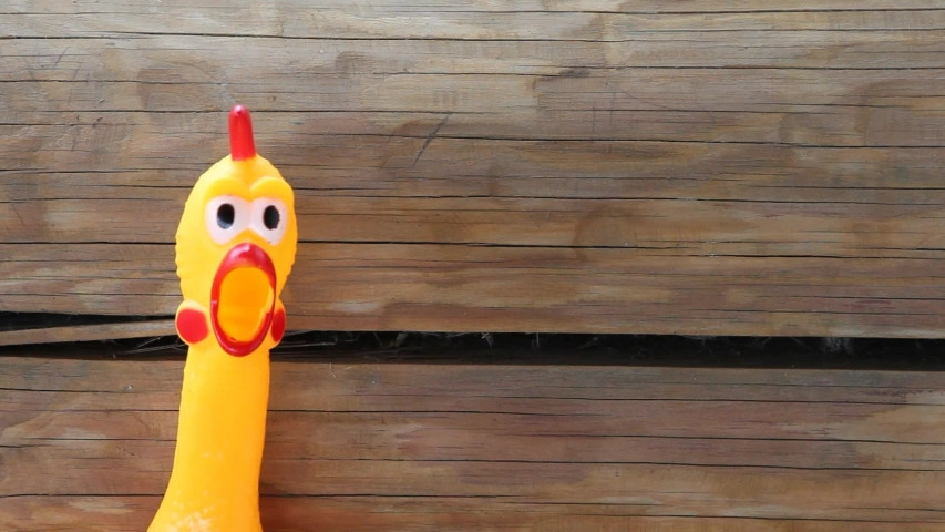 Footage of toy rubber chicken  | Shutterstock HD Video #1052731694