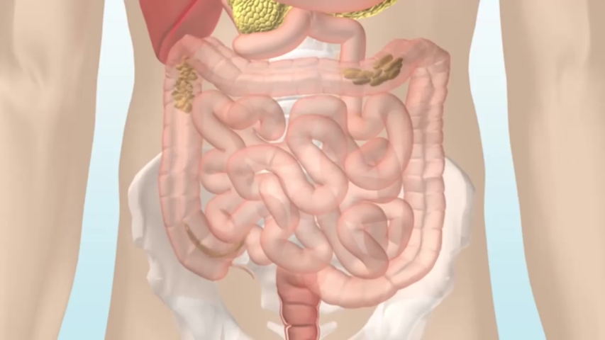 How the Digestive System Hd