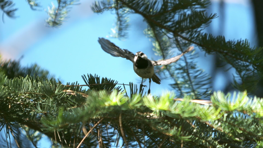 Bird in flight in slow motion in a heavy forest on a summer day.