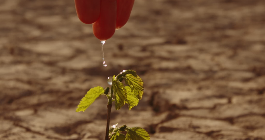 Close up shot of hand watering a lttle sprout on deserted ground. Cracked dead soil in dried lake or river - ecological disaster, save our planet 4k footage Royalty-Free Stock Footage #1052779613