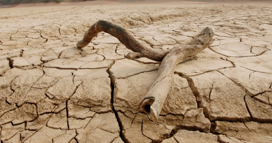 Close up shot of dead branch lying on deserted ground. Driftwood on cracked soil mud dried after erosions and desertification - ecological disaster concept 4k footage Royalty-Free Stock Footage #1052779619