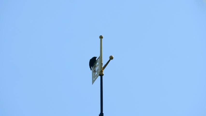 Two black crows sit on the tip of a traditional dutch church tower. The crows can keep a good overview of their surroundings from this height. High quality 4K footage.   Shutterstock HD Video #1052807264