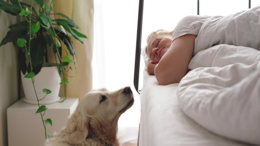 Funny video. love for pets. big white dog wakes up the mistress in the bedroom in the early morning | Shutterstock HD Video #1052823656