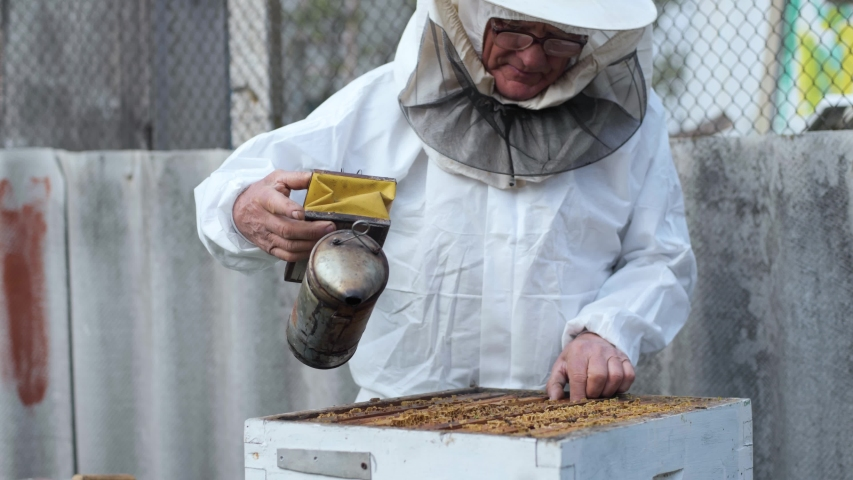 beekeeping, an elderly man in protective outfit with glasses for eyes fumigates bees removes honeycombs from hives to check honey harvest in apiary on a sunny day Royalty-Free Stock Footage #1052842049