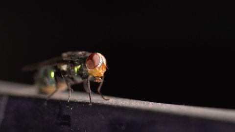 Fly insect and water droplet on mouth on dark background