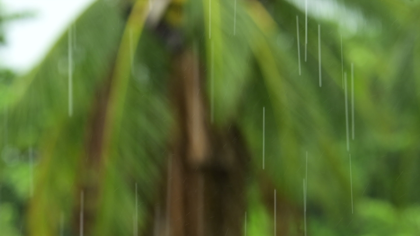 Rain drops falling on a blurred out of focus tropical palm tree background. Torrential rainy season, raining hard in the rainforest. | Shutterstock HD Video #1052913257