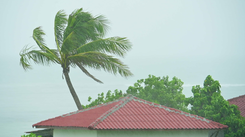 Palm tree and a roof top of a house exposed to the high winds of a tropical super cyclone thunderstorm. Hurricane tornado strong wind is shaking palm trees on the coast | Shutterstock HD Video #1052913554